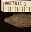 http://mczbase.mcz.harvard.edu/specimen_images/herpetology/large/R1102_C_boutoni_poecilopleurus_S_hd.jpg