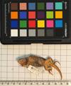 http://mczbase.mcz.harvard.edu/specimen_images/herpetology/large/R118597_L_lunatus_lunatus_v.jpg