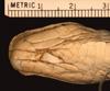 http://mczbase.mcz.harvard.edu/specimen_images/herpetology/large/R11994_L_ahaetulla_coeruleodorsus_P_hv.jpg