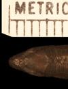 http://mczbase.mcz.harvard.edu/specimen_images/herpetology/large/R149573_G_underwoodi_hd.jpg