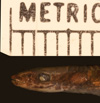 http://mczbase.mcz.harvard.edu/specimen_images/herpetology/large/R149573_G_underwoodi_hl.jpg