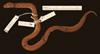 http://mczbase.mcz.harvard.edu/specimen_images/herpetology/large/R151769_A_badius_d.jpg