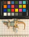http://mczbase.mcz.harvard.edu/specimen_images/herpetology/large/R158229_L_lunatus_lunatus_v.jpg