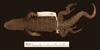 http://mczbase.mcz.harvard.edu/specimen_images/herpetology/large/R161090_L_archeforus_gallardoi_P_d.jpg