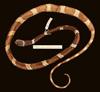 http://mczbase.mcz.harvard.edu/specimen_images/herpetology/large/R164674_D_latifasciata_d.jpg