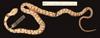 http://mczbase.mcz.harvard.edu/specimen_images/herpetology/large/R17099_S_nebulata_nebulata_v.jpg