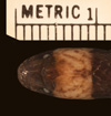 http://mczbase.mcz.harvard.edu/specimen_images/herpetology/large/R173871_A_sp_hd.jpg