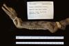 http://mczbase.mcz.harvard.edu/specimen_images/herpetology/large/R17581_C_crocodilus_fuscus_lateral_l.jpg
