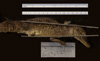 http://mczbase.mcz.harvard.edu/specimen_images/herpetology/large/R17604_C_crocodilus_fuscus_lateral_r.jpg