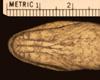 http://mczbase.mcz.harvard.edu/specimen_images/herpetology/large/R177202_A_cinereus_S_hv.jpg