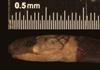 http://mczbase.mcz.harvard.edu/specimen_images/herpetology/large/R189857_M_hemprichii_rondonianus_hl.jpg