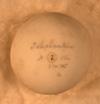 http://mczbase.mcz.harvard.edu/specimen_images/herpetology/large/R19006_A_gigantea_gigantea_egg.jpg