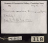 http://mczbase.mcz.harvard.edu/specimen_images/herpetology/large/R194608_T_carolina_triunguis_label.jpg