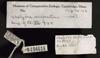 http://mczbase.mcz.harvard.edu/specimen_images/herpetology/large/R194616_C_serpentina_label.jpg