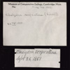 http://mczbase.mcz.harvard.edu/specimen_images/herpetology/large/R194638_C_serpentina_label.jpg