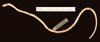 http://mczbase.mcz.harvard.edu/specimen_images/herpetology/large/R20600_T_albiceps_H_v.jpg