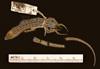http://mczbase.mcz.harvard.edu/specimen_images/herpetology/large/R2140_P_hispanicus_edwardsianus_S_d.jpg