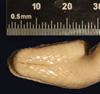 http://mczbase.mcz.harvard.edu/specimen_images/herpetology/large/R22442_E_cenchria_barbouri_H_hv.jpg