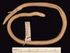 http://mczbase.mcz.harvard.edu/specimen_images/herpetology/large/R25300_C_apraeocularis_v.jpg