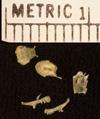 http://mczbase.mcz.harvard.edu/specimen_images/herpetology/large/R26591_D_novaeguineae_skull2.jpg