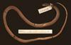 http://mczbase.mcz.harvard.edu/specimen_images/herpetology/large/R28468_C_variabilis_S_d.jpg