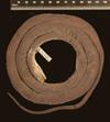 http://mczbase.mcz.harvard.edu/specimen_images/herpetology/large/R32471_D_shrevei_shrevei_H_d.jpg