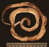 http://mczbase.mcz.harvard.edu/specimen_images/herpetology/large/R33947_C_monensis_granti_H_d.jpg