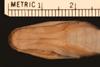 http://mczbase.mcz.harvard.edu/specimen_images/herpetology/large/R34878_D_nuchalis_H_hv.jpg