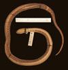 http://mczbase.mcz.harvard.edu/specimen_images/herpetology/large/R38252_D_haetiana_haetiana_H_v.jpg