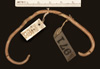 http://mczbase.mcz.harvard.edu/specimen_images/herpetology/large/R3971_L_albirostris_H_v.jpg