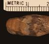 http://mczbase.mcz.harvard.edu/specimen_images/herpetology/large/R40555_C_smithi_H_hd.jpg