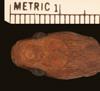 http://mczbase.mcz.harvard.edu/specimen_images/herpetology/large/R40581_D_medici_lamuensis_H_hd.jpg