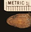 http://mczbase.mcz.harvard.edu/specimen_images/herpetology/large/R42505_A_landoi_H_hd.jpg