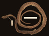 http://mczbase.mcz.harvard.edu/specimen_images/herpetology/large/R42782_D_vinitor_P_d.jpg
