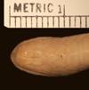 http://mczbase.mcz.harvard.edu/specimen_images/herpetology/large/R43580_C_griswoldi_H_hv.jpg