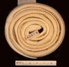 http://mczbase.mcz.harvard.edu/specimen_images/herpetology/large/R44847_A_elegans_candida_P_v.jpg