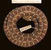 http://mczbase.mcz.harvard.edu/specimen_images/herpetology/large/R45963_D_flavozonatum_P_d.jpg