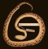 http://mczbase.mcz.harvard.edu/specimen_images/herpetology/large/R46502_E_cenchria_gaigei_P_v.jpg