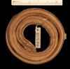 http://mczbase.mcz.harvard.edu/specimen_images/herpetology/large/R46508_C_imperialis_copei_P_d.jpg
