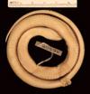 http://mczbase.mcz.harvard.edu/specimen_images/herpetology/large/R46508_C_imperialis_copei_P_v.jpg