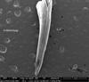 http://mczbase.mcz.harvard.edu/specimen_images/herpetology/large/R48464_N_melanoleuca_Fang2.jpg