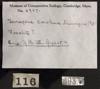 http://mczbase.mcz.harvard.edu/specimen_images/herpetology/large/R4937_T_carolina_triunguis_label.jpg