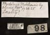 http://mczbase.mcz.harvard.edu/specimen_images/herpetology/large/R4944_P_concinna_mobilensis_note.jpg