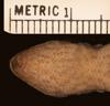 http://mczbase.mcz.harvard.edu/specimen_images/herpetology/large/R49519_L_chacoensis_H_hv.jpg