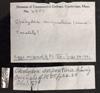http://mczbase.mcz.harvard.edu/specimen_images/herpetology/large/R4957_C_serpentina_label.jpg