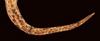 http://mczbase.mcz.harvard.edu/specimen_images/herpetology/large/R53220_A_major_sc.jpg