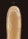 http://mczbase.mcz.harvard.edu/specimen_images/herpetology/large/R55385_L_bicolor_hv.jpg