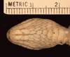 http://mczbase.mcz.harvard.edu/specimen_images/herpetology/large/R55830_D_flavida_broadleyi_P_hv.jpg