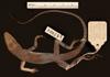 http://mczbase.mcz.harvard.edu/specimen_images/herpetology/large/R57202_A_luciae_H_d.jpg