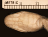 http://mczbase.mcz.harvard.edu/specimen_images/herpetology/large/R74308_C_braestrupi_P_hv.jpg